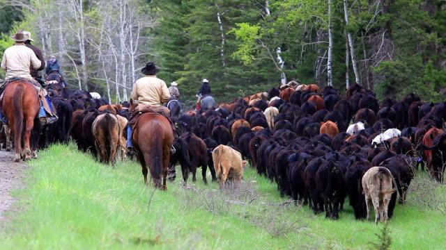 Cowgirls und Cowboys Hüten Sie das Vieh