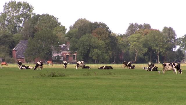 Kühe Grasen auf Wiese
