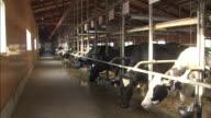 Cowshed: Long shot