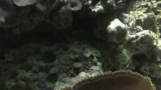 crab feeding - HD 1080/30F