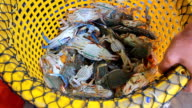 Crab is thrown into basket