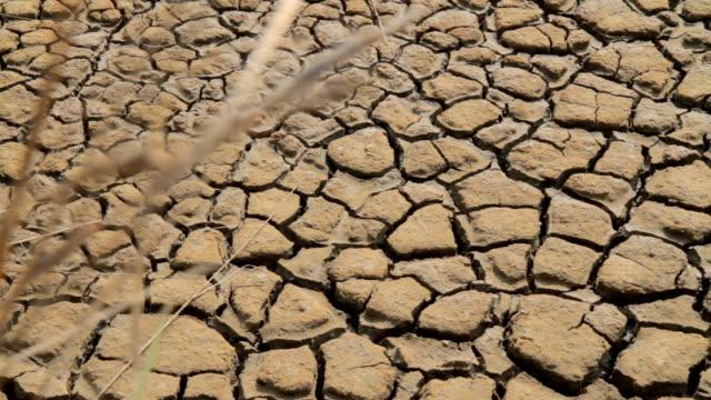 HD: Cracked Soil