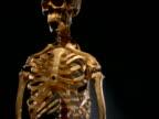 Crane down from skull to skeleton illuminated against black background
