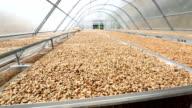 HD crane shot: Coffee beans drying solar plantation house