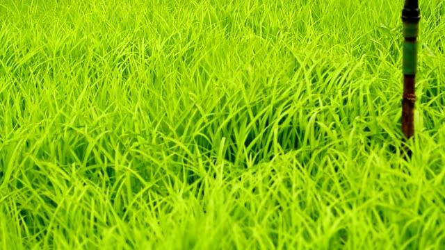 crane shot : grass field