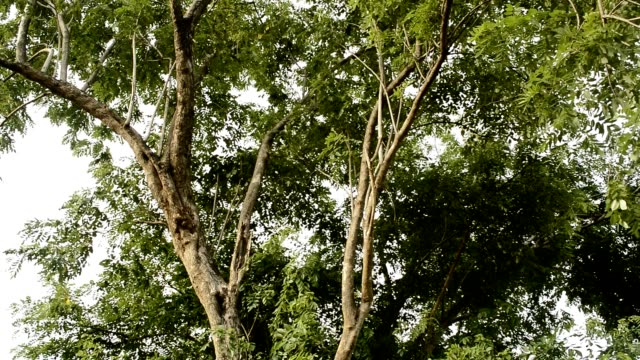 crane shot of tree.Full HD video