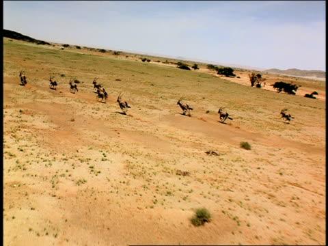 Crane shot tracking shot over herd of antelope running in desert