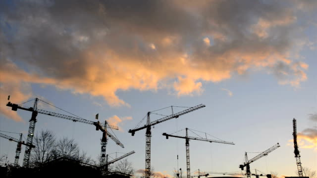 Cranes at sunset Time Lapse HD