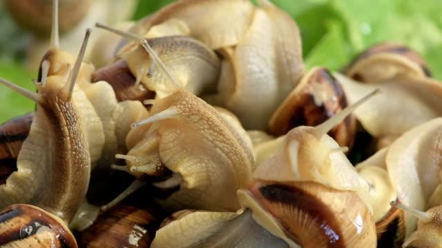 Indicizzazione snails, primo piano