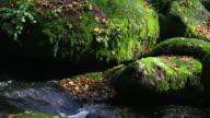 HD Creek in rocky autumn forest tilt up