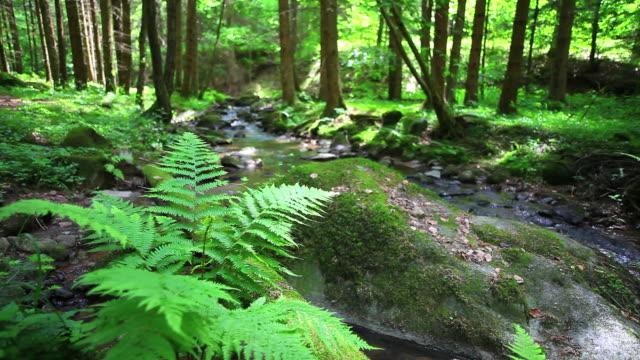 HD Creek nella foresta di primavera dolly shot