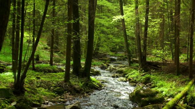 Creek im Frühjahr Wald Dolly Shot (4:2: 2 @100 Mbit/s)