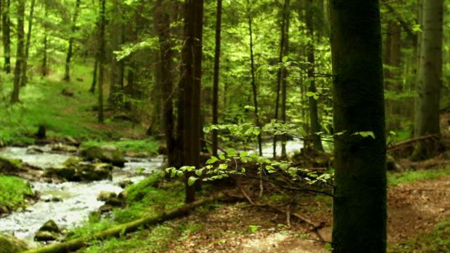 Ruscello nella foresta di primavera Dolly Shot (4:2: 2 a 100 Mb/s)