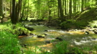 Creek In Spring Forest Dolly Shot