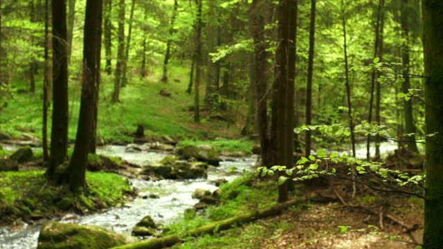 Creek In Spring Forest Dolly Shot (4:2:2@100 Mb/s)