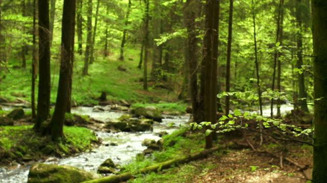 HD Creek nella foresta di primavera Dolly Shot (4:2: 2 a 100 Mb/s)