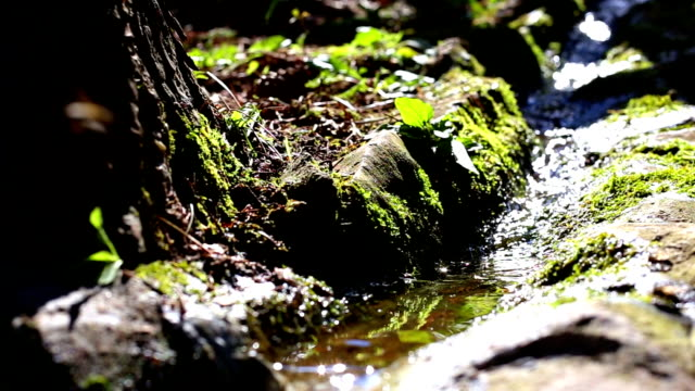 Creek Water