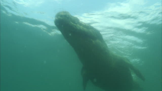 MS POV Crocodile swimming in water / Unspecified