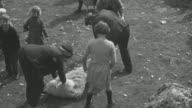 1944 Crofting community cooperating by clipping sheep in field together / Achriesgill, Sutherlandshire, Scotland