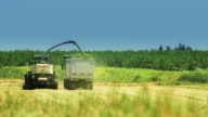 Crop Harvesting in summer field