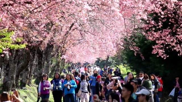 menigte en toeristische genieten in voorjaar cherry blossoms
