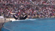A crowd at SeaWorld watches a killer whale show.