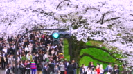 Crowd under the Cherry blossoms trees at Tayasumon Gate in Kitanomaru Park Chidorigauchi. Traffic signal indicates toward junction of Yasukuni Doori.