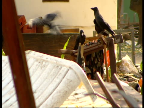 Crows scavenge in the rubble of a hotel destroyed by the 2004 Indian Ocean Tsunami