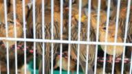 cruelty birds.