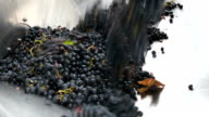 Crushing grapes