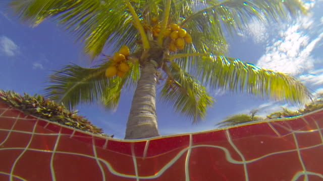 Cuba Tourism: Resort swimming pool point of view of the tropical climate in the Caribbean Island