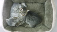 Samen knuffelen