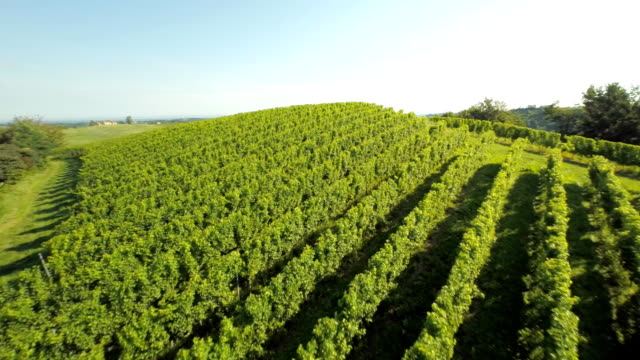 AERIAL Cultivating The Vineyards