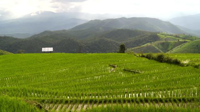 gebogene terrassierten Reisfelder in Chaing Mai, Thailand