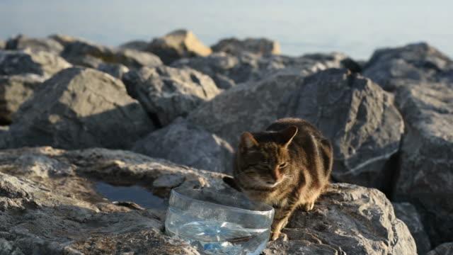 Cute Cat Drinking Water