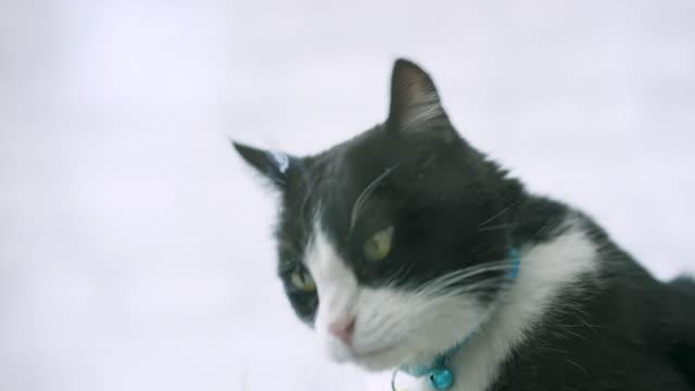 Cute Cat Licking Glass