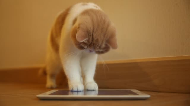 Cute cat play digital tablet