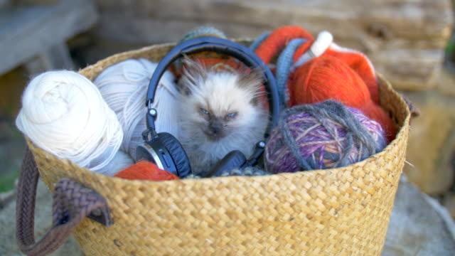 Cute kitten listening music