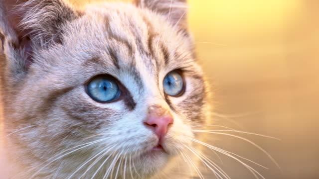 SLO MO Cute Kitten