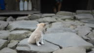 Cute newborn puppy