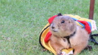 Cute Prairie dog