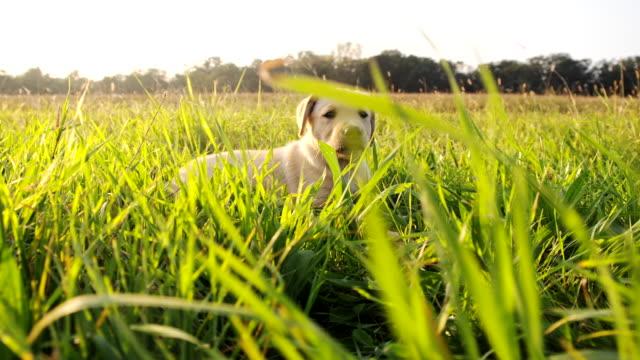 LA niedlichen Welpen im Gras