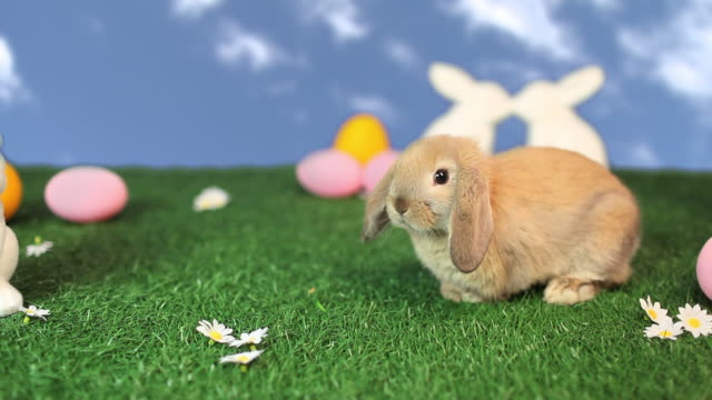 Cute rabbit and easter scene