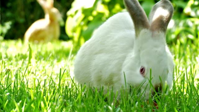 Niedlichen Kaninchen