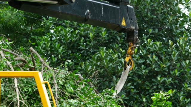 cutting big tree , engine crane
