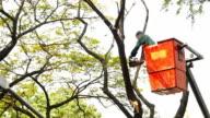 Taglio di un albero