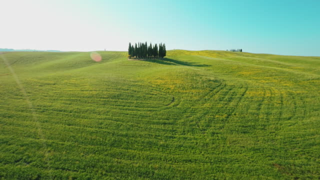 AERIAL Cypress trees among meadow in the Tuscany