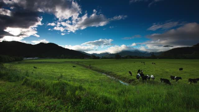 ZEITRAFFER: Milchkuh unter einem Sommer Himmel.