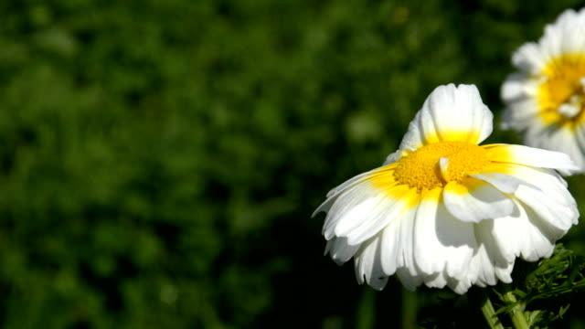 Daisy Blume Feld