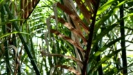 dancing light on leaf nipa palm